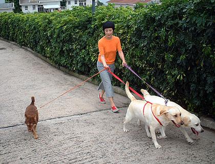 Liza, Lucky, Momo and Fok Fok Route_photo_1022